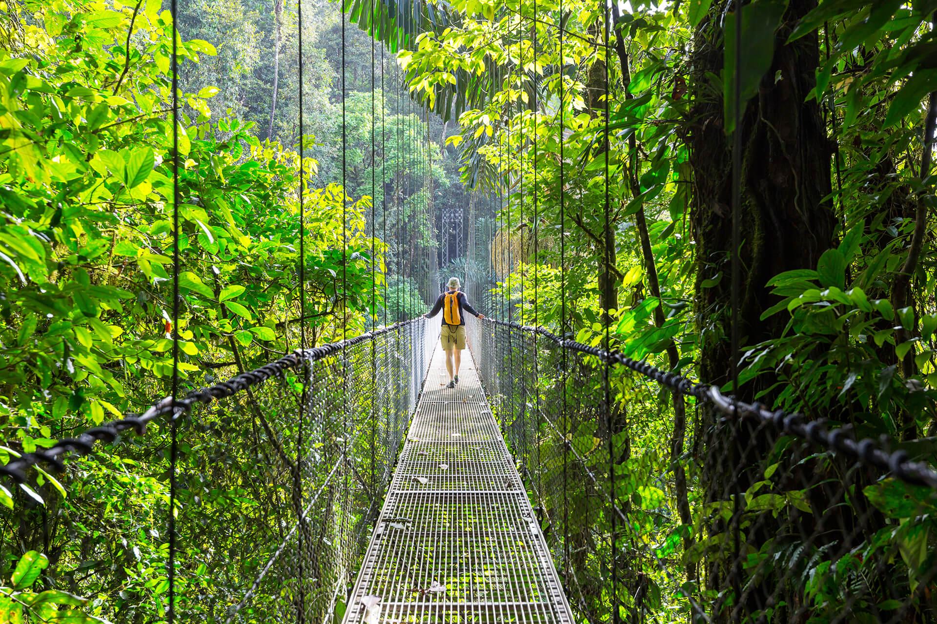 Costa Rican jungle